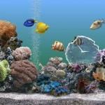 Aqua Motion Desktop Movie for Windows DreamScene